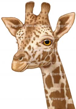 artist of giraffe illustration
