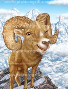 wild life artist of mountain goat art