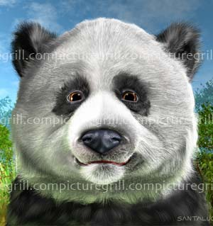 illustrations of pandas and panda art