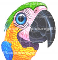 artist of parrot art and illustration