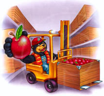 educational illustration of fruit bear