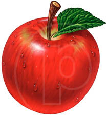 illustrator of apples and apple art